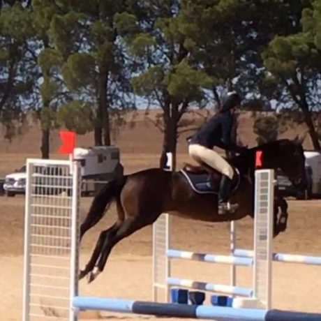 The scary blue blocks which I donated to the club. I am very glad he jumped them!