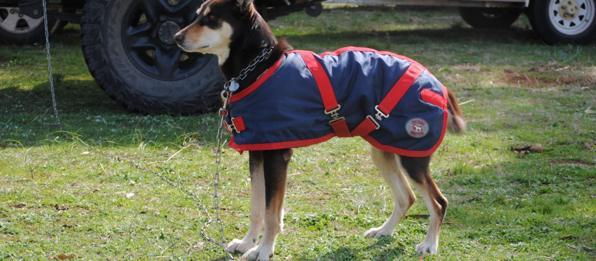 Discounted Dog Coats