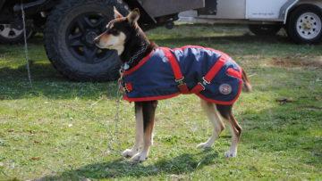 Discounted Dog Coats